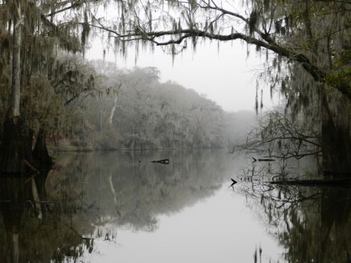 Calhoun Tract : Estill : Hampton County : South Carolina