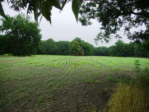 157 +/- Acre Farm / Hunting Land : Mariana : Lee County : Arkansas