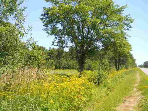 Tbd E. Gogomain Rd.  Mls #1068790 : Pickford : Chippewa County : Michigan