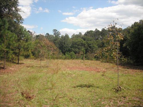 Homesite Or Recreational Property : Oglethorpe : Macon County : Georgia