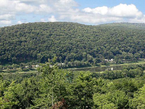 Pittston Forest : Ransom : Lackawanna County : Pennsylvania