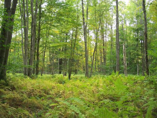 5 Acres Wooded Hunting Land : Preston : Chenango County : New York