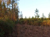39 Acres Lot 9 Tall Pines