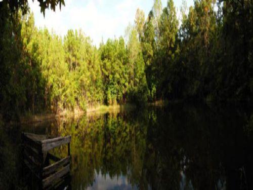 Bitter Root Farm : Chattahoochee : Gadsden County : Florida