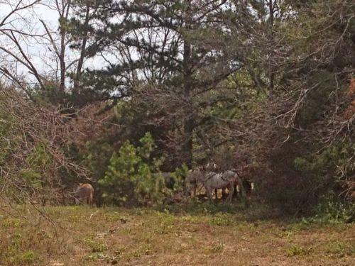 Speer Road Properties Tract 6 : Speer : Choctaw County : Oklahoma