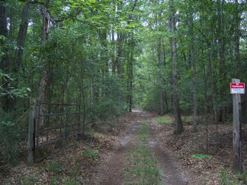 74 Acre Isolated Cabin Timberland : Omaha : Stewart County : Georgia