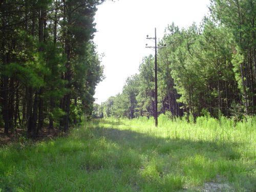 Varnville Tract 2 : Hampton : Hampton County : South Carolina