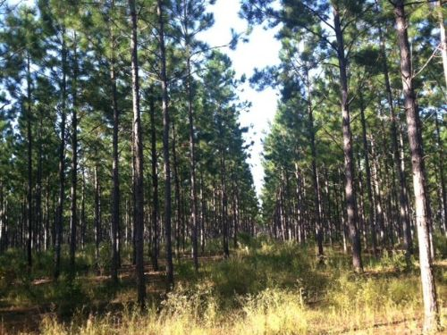 Hunting/ Timber Investment : Dawson : Terrell County : Georgia