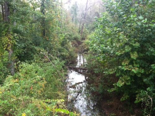 Mini-farm Or Homesite- Large Creek : Cuthbert : Randolph County : Georgia