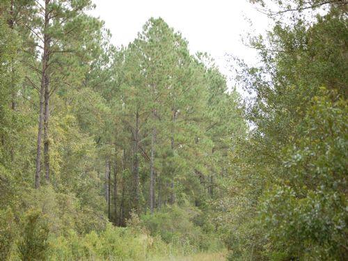Aucilla River Plantation : Lamont : Jefferson County : Florida