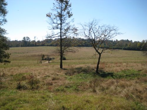 47.59 Acres Fenced Pasture & Timber : Fairmount : Gordon County : Georgia