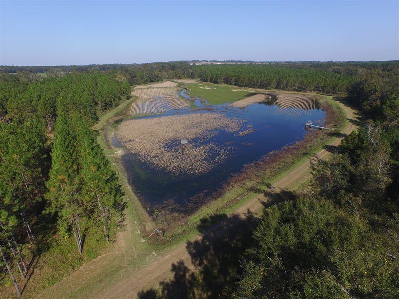 Cat Creek- Ducks, Deer, Dove & More : Quitman : Brooks County : Georgia