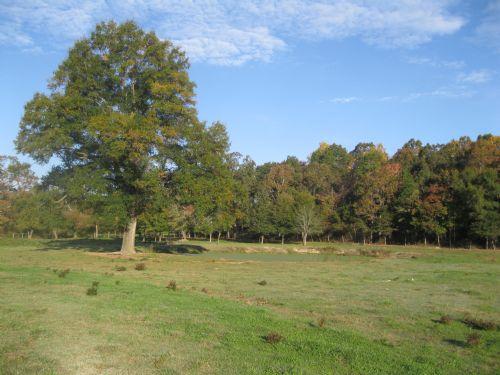 Silk Hope Property : Siler City : Chatham County : North Carolina