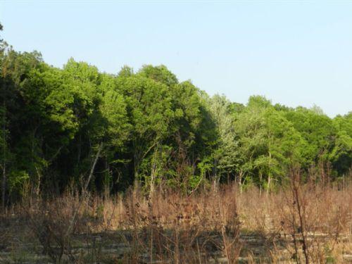 Cricket Hill - 180 Acres : Estill : Hampton County : South Carolina