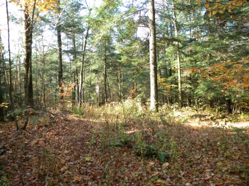 39 Acres Hunting Fishing Snowmobile : Groton : Tompkins County : New York