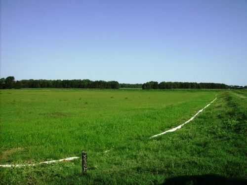 145 +/- Acre Farm : Carlisle : Lonoke County : Arkansas