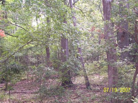 330 Acre Hunting And Timber Tract : Chattahoochee : Decatur County : Georgia