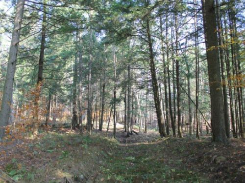 173 Acres Timber Meadows Hunting : Camden : Oneida County : New York