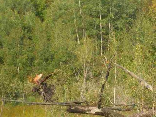 Tbd Unnamed Woods Rd  Mls#1069663 : Covington : Baraga County : Michigan