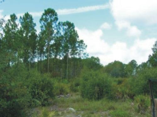 20 Acres - Cedar Key (a-399) : Cedar Key : Levy County : Florida