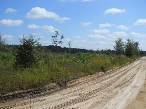 Located Near Belmore Forest : Keystone Heights : Clay County : Florida