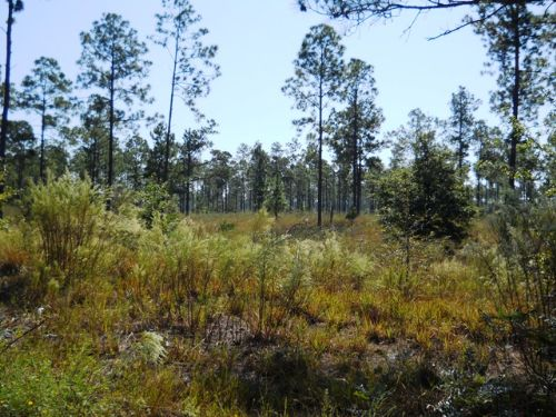 2086 Acres Close To Jacksonville : Lawtey : Clay County : Florida