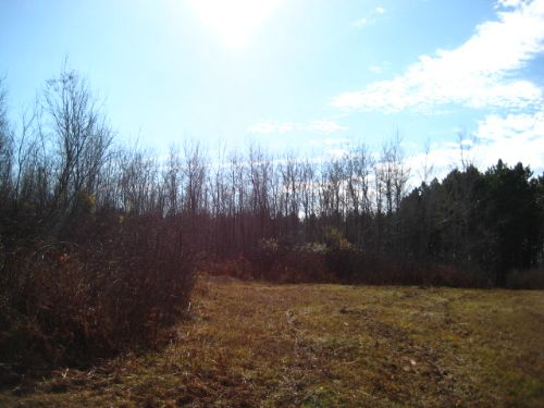 282 Recreational Acre Vacant Parcel : Cassian : Oneida County : Wisconsin