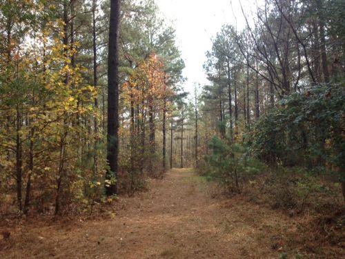 Gorgeous Timber And Pastureland : Madison : Morgan County : Georgia