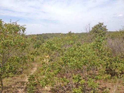Speer Road Properties Tract 4 South : Speer : Choctaw County : Oklahoma
