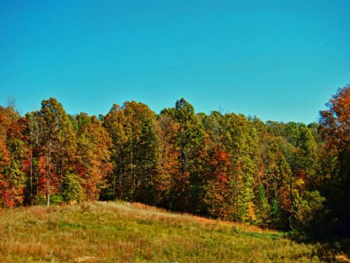 53.4 Acres With Pond : Woodruff : Spartanburg County : South Carolina