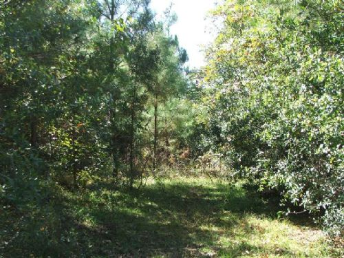 16 Acre Homesite In Marion : Marion : Perry County : Alabama