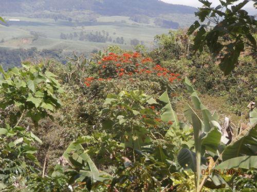 66.7 Acre Scenic Mt. Coffee Farm : Tucurrique De Cartago : Costa Rica