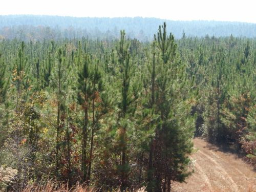 Investment And Recreation Land : Eclectic : Elmore County : Alabama