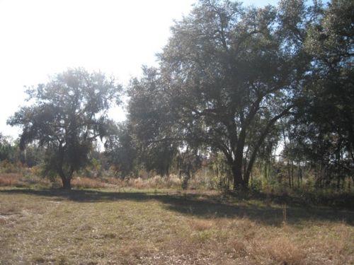 Mercer Lane Tract : Cottageville : Colleton County : South Carolina