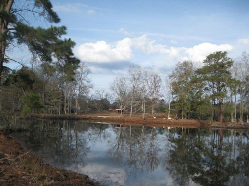 Reeves Tract : Reevesville : Dorchester County : South Carolina