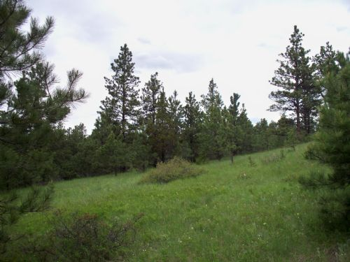 20 Acres Near Roundup : Roundup : Musselshell County : Montana