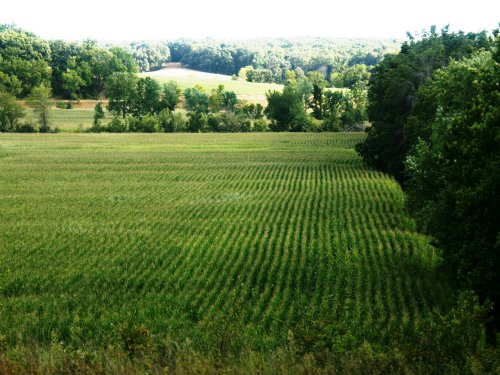162 Acres Has It All : Salisbury : Chariton County : Missouri