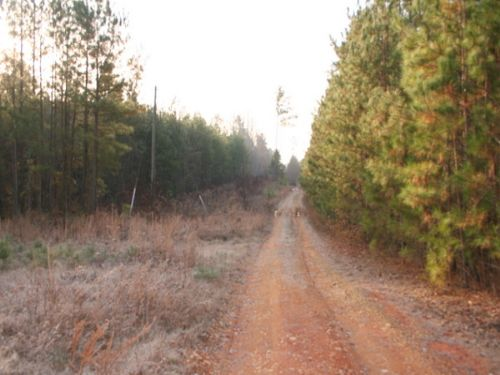 14.13 Acres Chesdin Lake Road : Amelia : Virginia