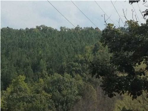 Owner Financing 5 Acres : South Pittsburg : Marion County : Tennessee