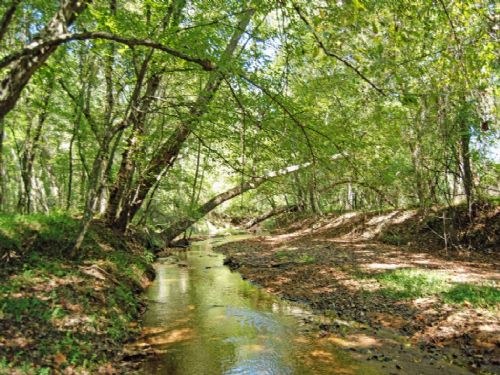 197.4 Acres For Hunting Enthusiasts : Union : Union County : South Carolina