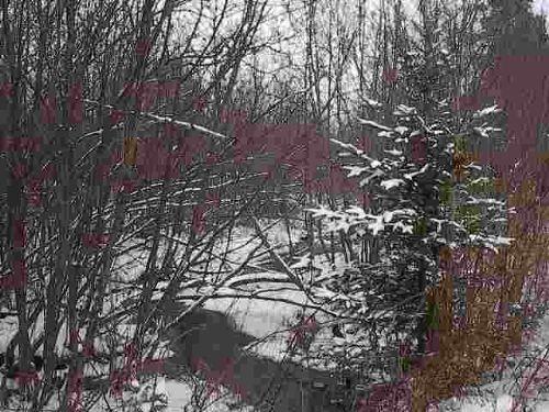 Tbd Off Mill Creek Rd  Mls# 1070198 : Republic : Marquette County : Michigan