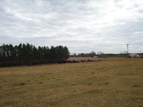 Banks Farm 89 +/- Acres : Statesboro : Bulloch County : Georgia