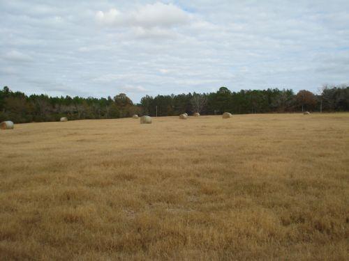 Hamilton Farm : Statesboro : Bulloch County : Georgia