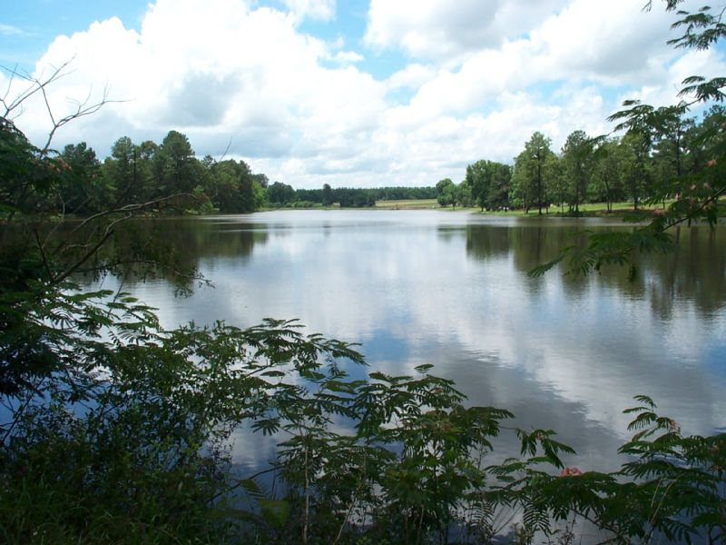 15 Acre Lake- Heart Of Deer Country : Oglethorpe : Macon County : Georgia