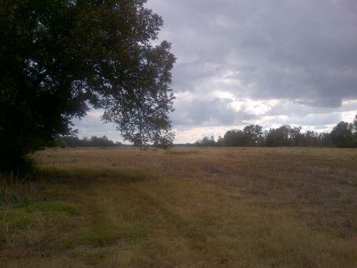 Half Open Fields/ Half Wooded : Ellaville : Schley County : Georgia