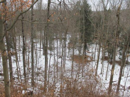 5 Acres Country Building Lot : Trenton : Oneida County : New York