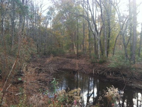 Hunting Or Homesite- Great Location : Wrightsville : Johnson County : Georgia