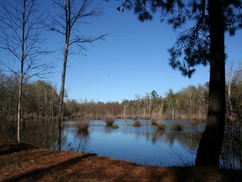 Elko Creek Shooting Preserve : Elko : Houston County : Georgia