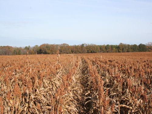 Tyler Farms : Americus : Sumter County : Georgia