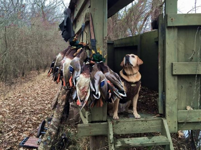 3400 Acre Farm And Timber : Holly Grove : Monroe County : Arkansas